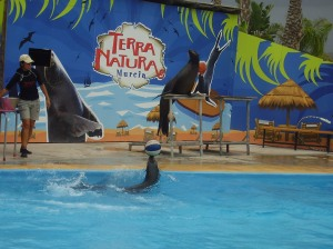 Terra Natura is located to the north-west of the town of Espinardo in Murcia on the east coast of Spain. Access is via the A-7 motorway and the Murcia highway